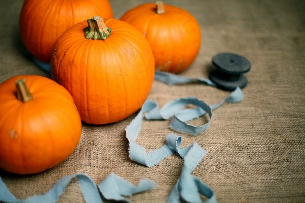 four pumpkins with blue ribbon