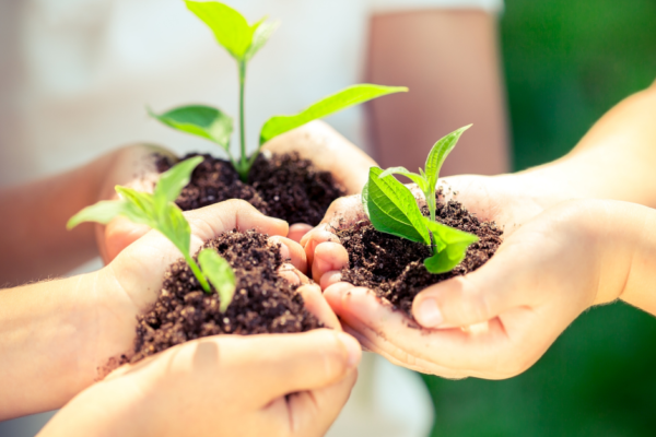 Image of three people holding dirt in their hards with sprouting plants in the dirt